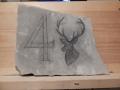 No. 4 stag