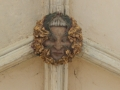 ceiling boss Norwich Cathedral Cloisters