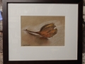 Beech nut, pastel drawing £90. picture size 130mm x 190mm, framed size 285mmx340mm