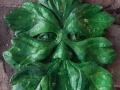 light Green Man