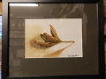 Beech nut, Oil painting framed £95 picture size 130mm x 190mm, framed size 285mm x 340mm